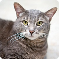 Adopt A Pet :: O'Rourke - Chicago, IL