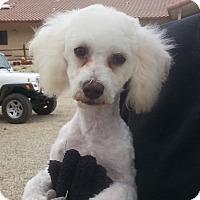 Adopt A Pet :: Silver - Acton, CA