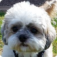 Adopt A Pet :: Hobie - La Costa, CA
