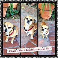 Adopt A Pet :: Charley - Fullerton, CA