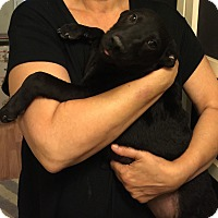 Adopt A Pet :: Phoenix-pending adoption - Fredericksburg, VA