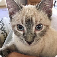 Adopt A Pet :: SnuggleBug - Monroe, GA