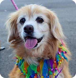 Cocker Spaniel/Spaniel (Unknown Type) Mix Dog for adoption in Charlotte, North Carolina - Winnie