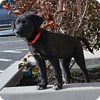 Adopt A Pet :: Annie - Ogden, UT