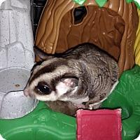 Adopt A Pet :: Mika (bonded to Blaze & Scout) - Phoenix, AZ