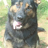 Adopt A Pet :: Bear B - Holly Hill, SC