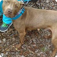 Adopt A Pet :: Reuben James - Jackson, TN