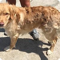 Adopt A Pet :: LUCKY #2 - Murrells Inlet, SC