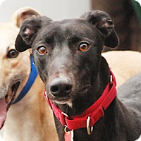 Adopt A Pet :: Party - Ware, MA