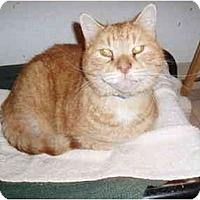 Adopt A Pet :: Georgie Porgie - Hamburg, NY