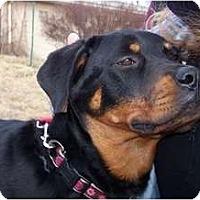 Adopt A Pet :: Jade-ADOPTION PENDING - Antioch, IL