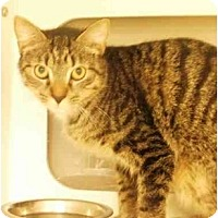 Adopt A Pet :: Bella - Maywood, NJ