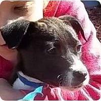 Adopt A Pet :: Avalon - Plainfield, CT