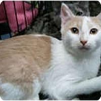 Adopt A Pet :: Malachi - Anchorage, AK