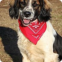 Adopt A Pet :: Freckles - Albany, NY
