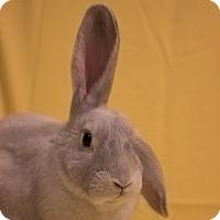 Adopt A Pet :: Finnick - Portland, ME