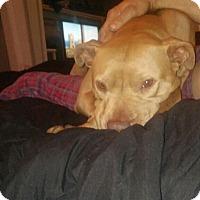 Adopt A Pet :: Remy, sweetie - Sacramento, CA