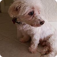 Adopt A Pet :: Maxx (FL) - Atlanta, GA