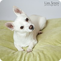 Adopt A Pet :: Arthur - Los Angeles, CA