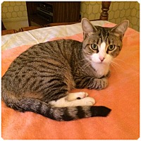 Adopt A Pet :: AUDREY - Hamilton, NJ
