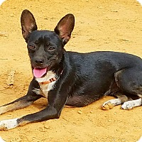 Adopt A Pet :: Trixie - Kendall, NY