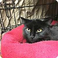 Adopt A Pet :: Sabrina - Warwick, RI