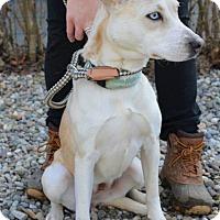 Adopt A Pet :: Tessa - Danbury, CT