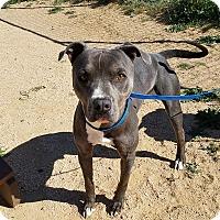 Adopt A Pet :: Chewy - California City, CA