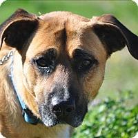 Adopt A Pet :: Stewart - Osage Beach, MO