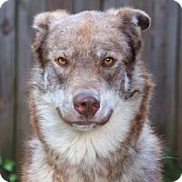 Adopt A Pet :: Kenobi - Baltimore, MD