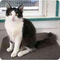 Adopt A Pet :: Muta (video) - Portland, OR