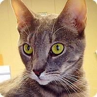Adopt A Pet :: Flint - Green Bay, WI