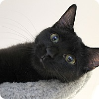 Adopt A Pet :: Charmer - Chicago, IL