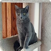 Adopt A Pet :: Xeric - Colorado Springs, CO