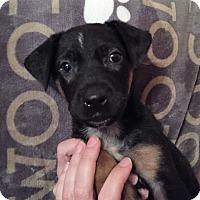 Adopt A Pet :: Marcus - Ft. Lauderdale, FL