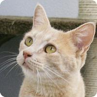 Adopt A Pet :: Harrah - Republic, WA
