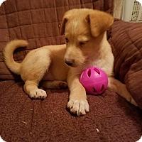 Adopt A Pet :: Sunshine (has been adopted) - Trenton, NJ