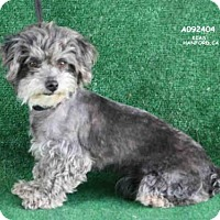 Adopt A Pet :: A092404 - Hanford, CA