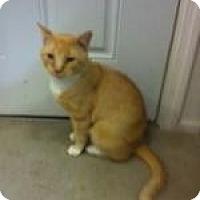 Adopt A Pet :: Duke - St. James City, FL