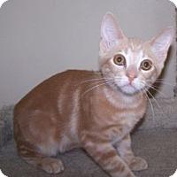 Adopt A Pet :: K-Amelia3-Nikko - Colorado Springs, CO