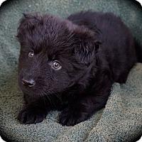 Adopt A Pet :: BooBoo - La Habra Heights, CA