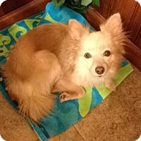 Adopt A Pet :: Sandy - Garwood, NJ