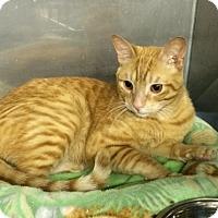 Adopt A Pet :: Bentley - Byron Center, MI