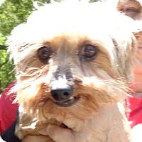 Adopt A Pet :: pheebee Sue - Crump, TN