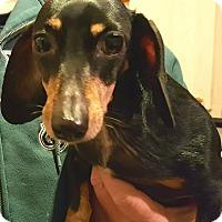 Adopt A Pet :: Noni - Andalusia, PA