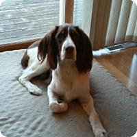 Adopt A Pet :: Henry - Northfield, MN