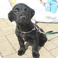 Adopt A Pet :: Casie - West Chicago, IL