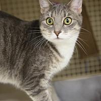 Adopt A Pet :: Dixon - Olive Branch, MS