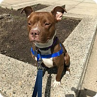 Adopt A Pet :: HANK - Bridgewater, NJ