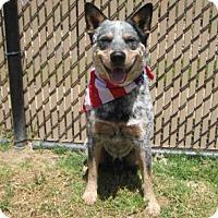 Adopt A Pet :: *CRUISER - Norco, CA